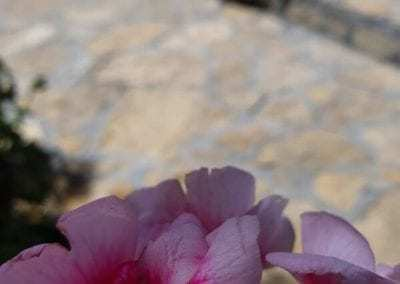 dekorativni lomljeni kamen za staze